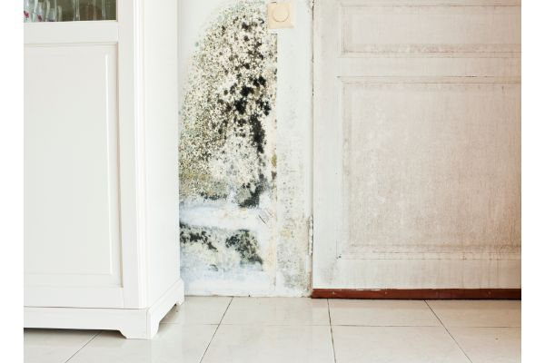My House has Mold and Termite Damage Can I Still Sell