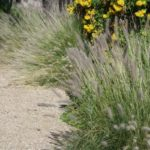 Converting Your Arizona Lawn to Xeriscape: What to Expect